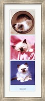Kittens Fine Art Print