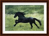 Black Horse Running Fine Art Print