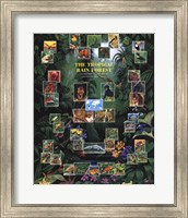 Tropical Rain Forest movie poster Fine Art Print