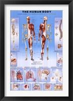 Human Body Wall Poster