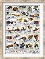 Snakes Wall Poster