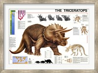 Triceratops Fine Art Print