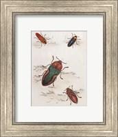 Chelsea Beetles-1 of 3 Fine Art Print
