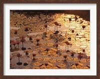 Lotus Pond Fine Art Print