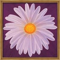 Daisy 9-3 Fine Art Print