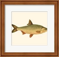 Small Antique Fish VI Fine Art Print