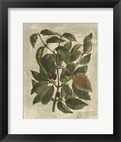 Printed Deshayes Trees II Fine Art Print