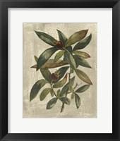 Printed Deshayes Trees III Fine Art Print