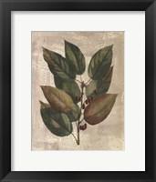 Printed Deshayes Trees IV Fine Art Print