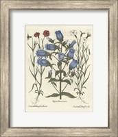 Floral IV Giclee