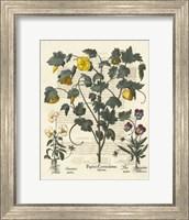 Floral VI Giclee