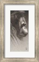 Jojo, The Orangutan Giclee