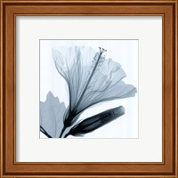 Hibiscus and Bud Fine Art Print