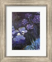 Waterlillies and Agapanthus Fine Art Print
