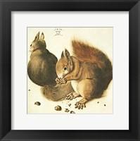 Squirrels Fine Art Print