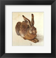 Young Hare Fine Art Print