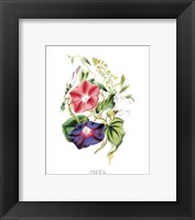 Flowers (Untitled) - Morning Glory Fine Art Print