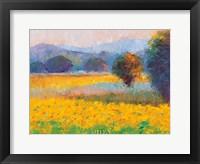 Sunflowers in Provence Fine Art Print