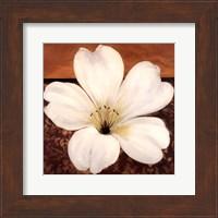 Azalea Blossom Fine Art Print