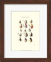 Trout Flies I Fine Art Print