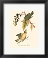 Audubon's Warbler Fine Art Print