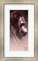 Jo-Jo, the Orangutan Fine Art Print
