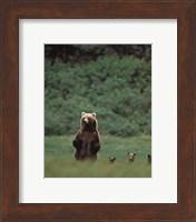 Grizzlies Fine Art Print