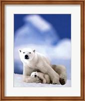 Polar Bear And Baby Fine Art Print