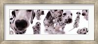 Dogs - Dalmatians Fine Art Print
