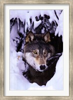 Winter Wolf Wall Poster
