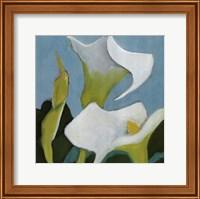 Calla Lillies 4 Fine Art Print
