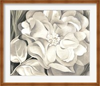 The White Calico Flower, 1931 Fine Art Print