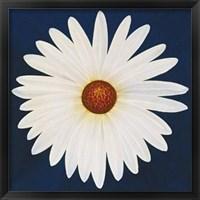 Daisy 123 - 2004 Fine Art Print