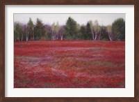 Blueberry Fields in Autumn Fine Art Print
