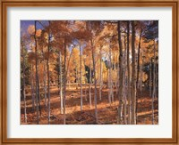 Autumn Aspens Fine Art Print
