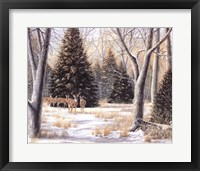 Cedar Sunday Fine Art Print