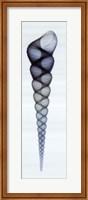 Turritella (Teal) Fine Art Print