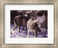 Winter Wolves Fine Art Print