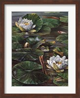 Frog In Lily Pond Fine Art Print