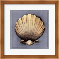 Coastal Shell II Fine Art Print