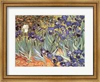 Irises in the Garden, Saint-Remy, c.1889 Fine Art Print