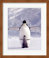 Penguin and Chick Wall Poster