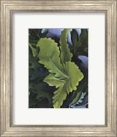Green Oak Leaves Fine Art Print