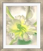 An Orchid Fine Art Print
