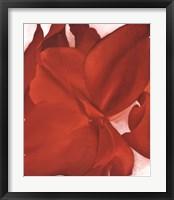 Red Cannas Fine Art Print
