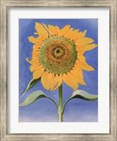 Sunflower, New Mexico, 1935 Fine Art Print