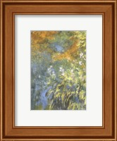 Yellow Iris Fine Art Print