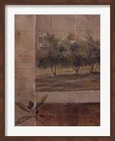 Olive Groves I Fine Art Print
