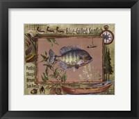 Blue-Gilled Sunfish Fine Art Print