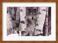 Mountain Ranger Fine Art Print